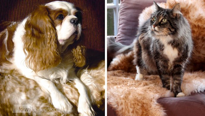 Sheepskin pet rugs for cats or dogs